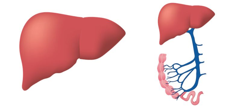 Signs of Liver damage: Read the Signals Your Body Sends