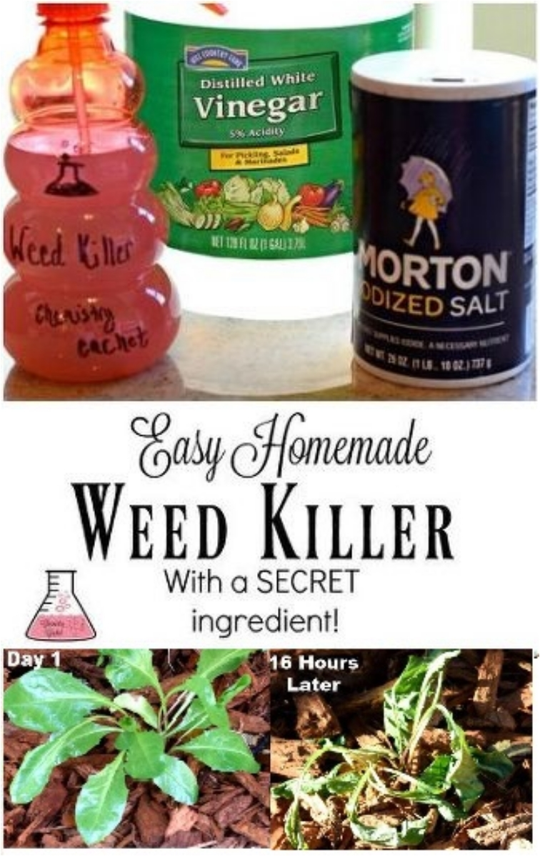 16 DIY Natural Weed Killers