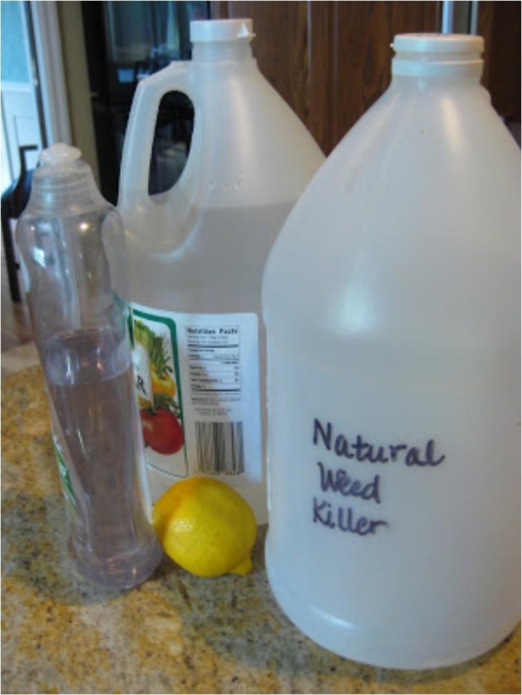 16 DIY Natural Weed Killers
