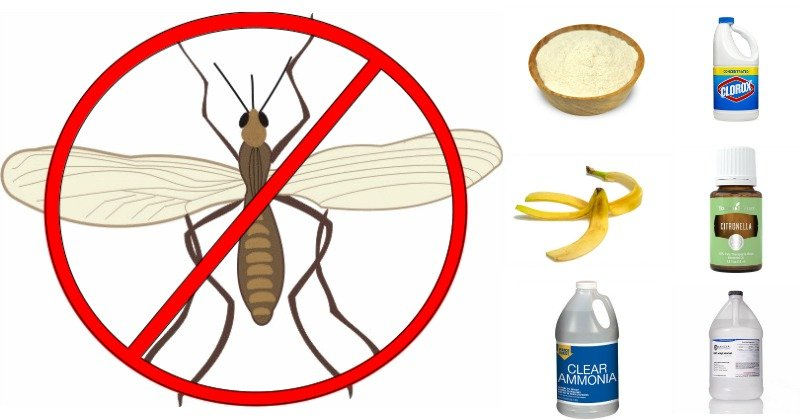 how to get rid of gnats in your house