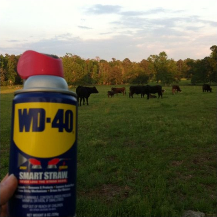 WD-40: Small Can with Large Potential