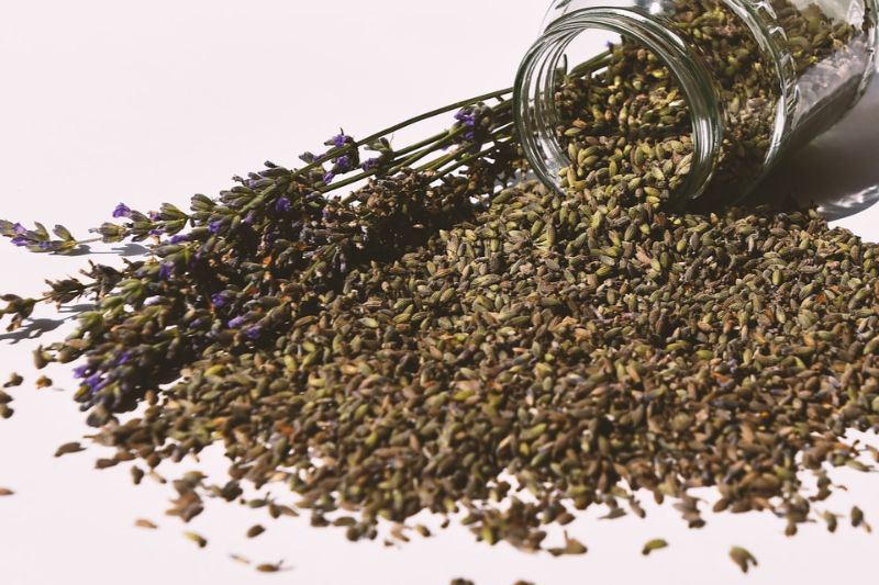 Lavender Oil Uses : How to Reap the Benefits?