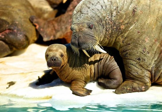 23 Of the Cutest Baby Animals in the World