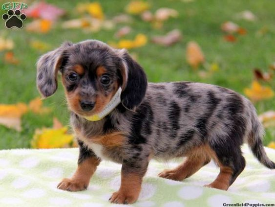 20 of the Cutest Hybrid Dog Breeds that Got the Best of the Two Worlds
