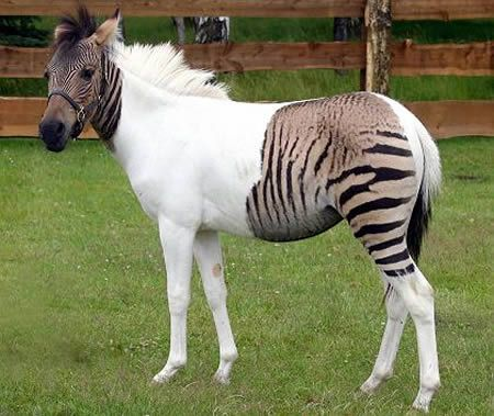 18 Bizarre Hybrid Animals You Won't Believe Exist