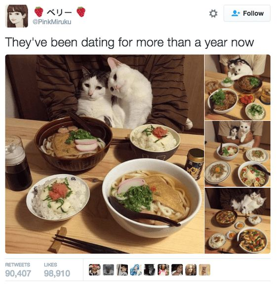 22 Tweets about Cats that Will Make you Go Meow