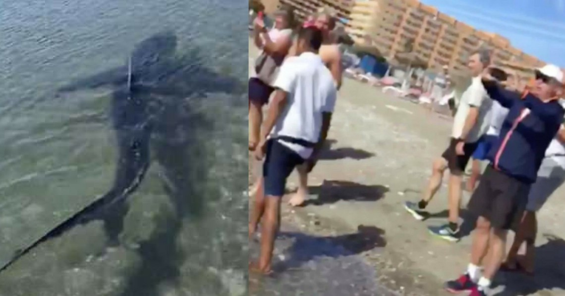10-Foot Shark Spotted At Costa Del Sol Beach Makes Swimmers Dash Off The Water In Fear