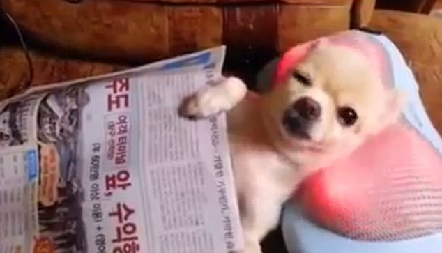 Puppy Enjoys Electric Neck Massage After a 'Ruff' Day