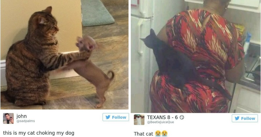 15+ of the Funniest Cat Tweets Ever Posted