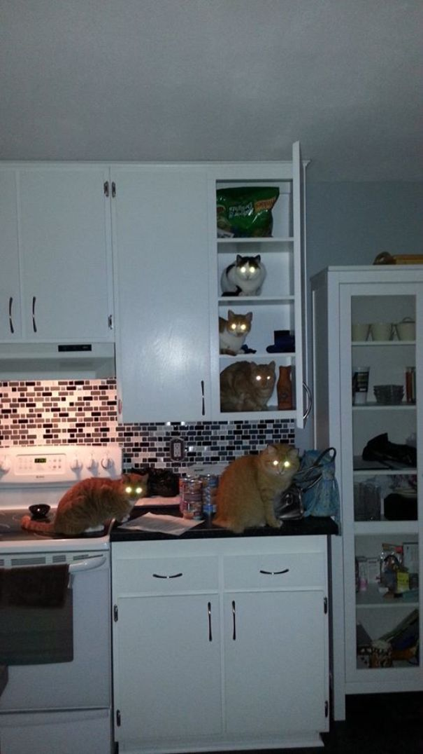 15+ Photos of Pets Caught Red-Handed with Their Crimes