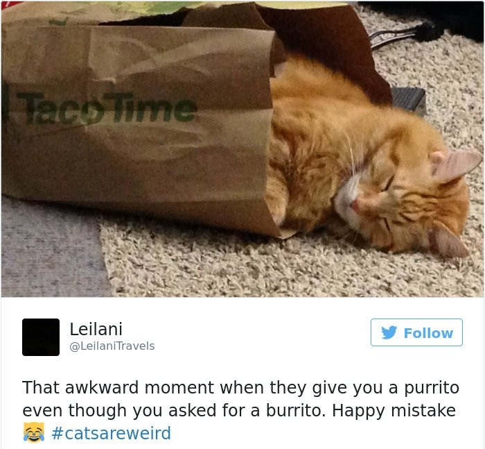 15+ of the Funniest Cat Tweets Owners Posted for Revenge
