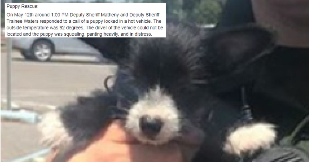 Breathless Puppy Rescued From Overheated Vehicle by Florida Cops (1)
