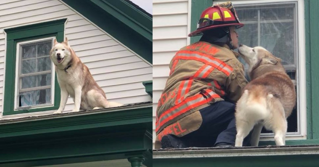 Dog Kisses Firefighter 'Thank You' For Saving Him From a Roof