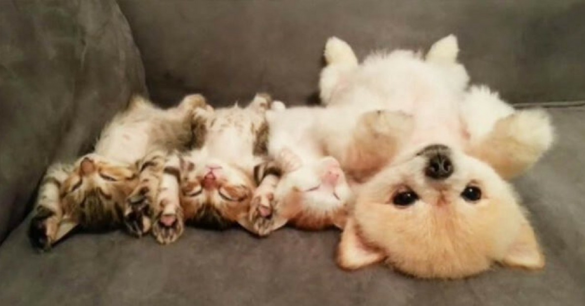 Puppy Doesn't Want to Wake Her Three Kitten Friends so She Comes up with the Cutest Plan! (2)