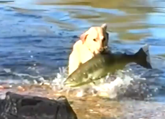 This Man Took His Dog Fishing -- He Was Stunned With What He Came Out of the Water With!