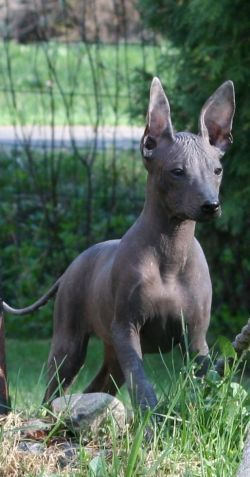 Top 13 Hairless Bald Animals in Case Your Were Curious