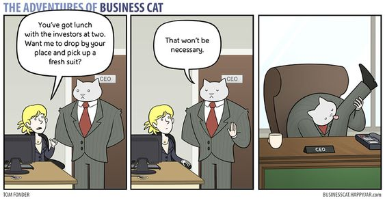 Top 22 Adventure Business Cat Memes to Brighten up Monday