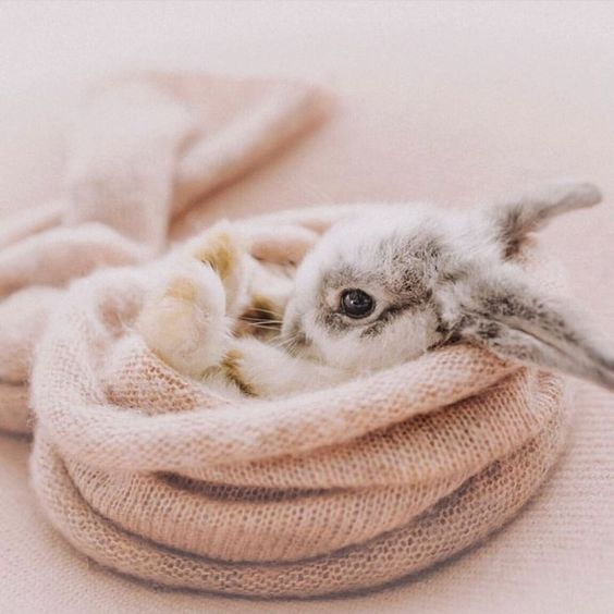 21 Cute Bunnies so Adorable You Would Love them as a Pet