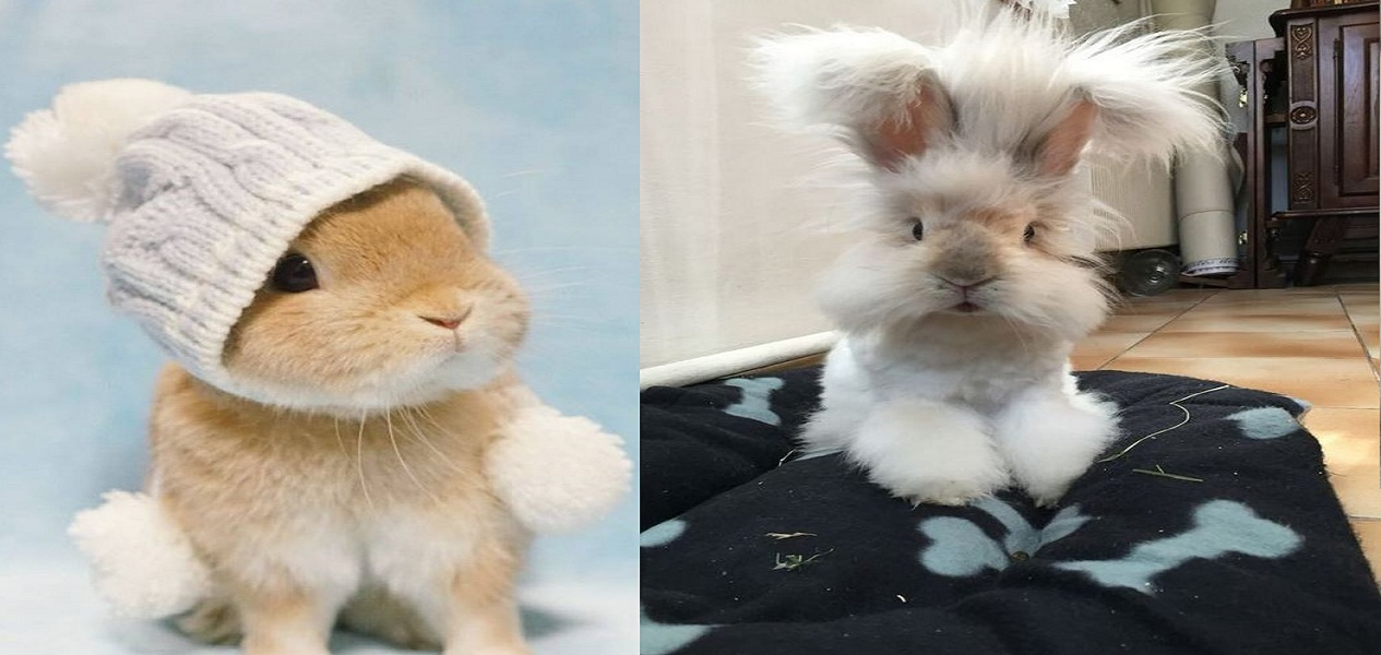 21 Cute Bunnies So Adorable You Would Love Them As A Pet Ritely