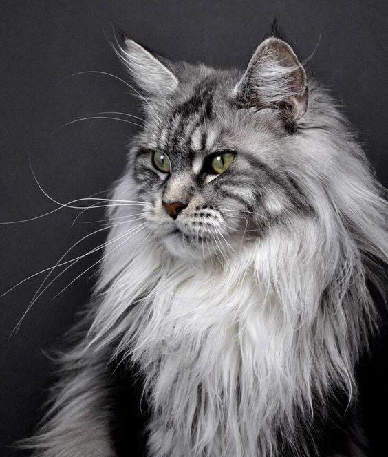 Meet the 10 Most Beautiful Cats in the World