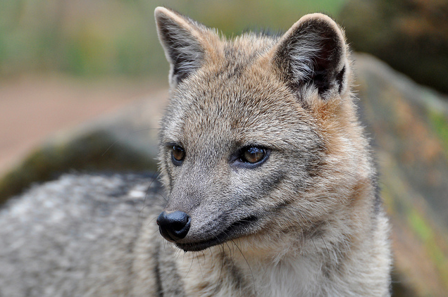 10 of the World's Most Beautiful Fox Species