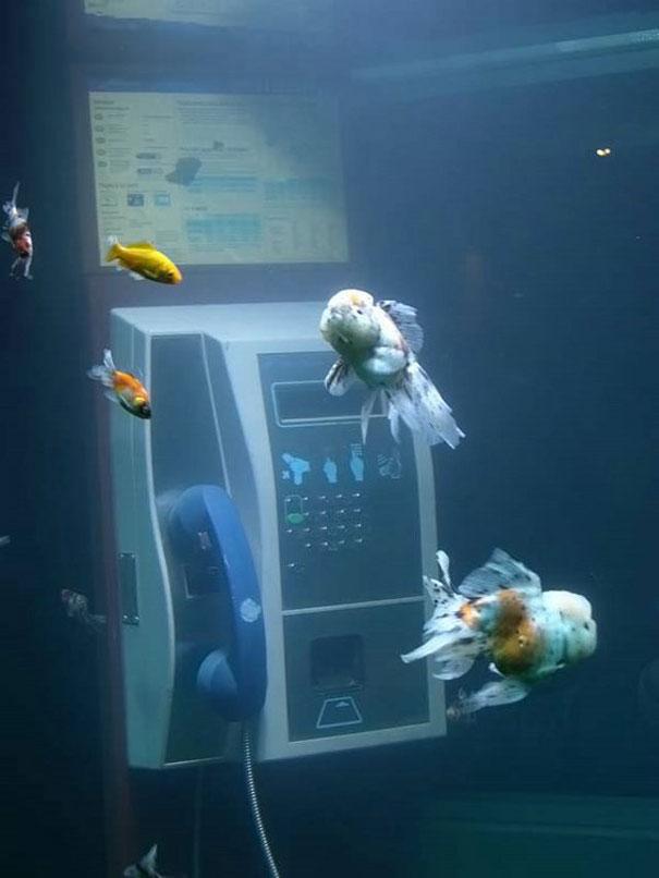 15 Extraordinary Aquariums to Spice Up Your Home