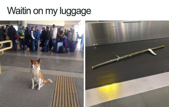 Heart-Melting: 30 of the Internet's Most Adorable Dog Memes Ever