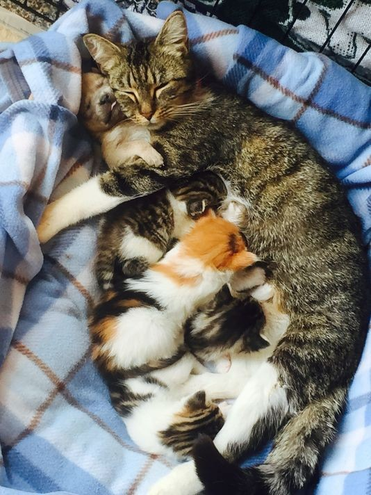 Mom Cat Adopts Orphaned Puppy to Join Her Kindle of Kittens