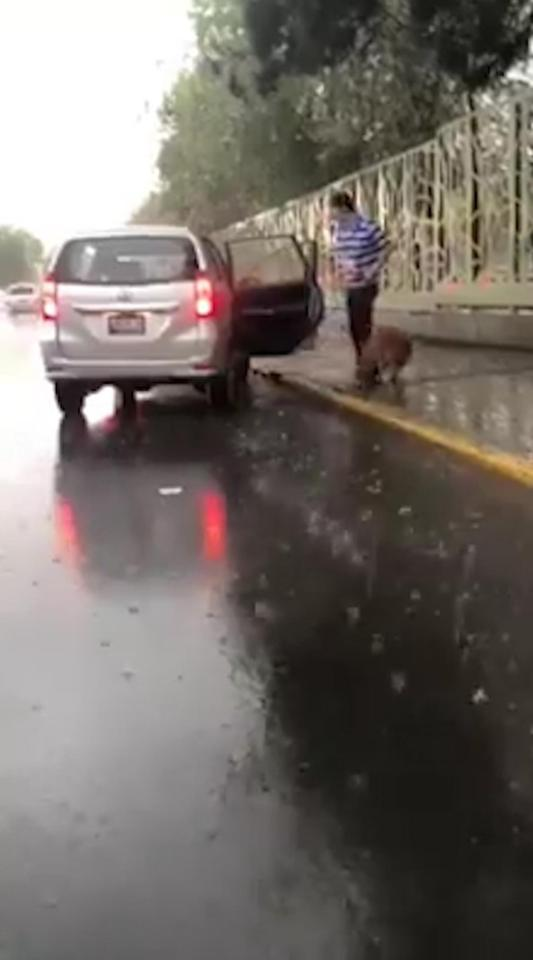 Dog Almost Slips Under Wheels of Owner's Car While Being Dragged For An 'Exercise' Amid Pouring Rain