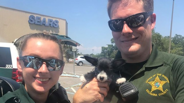 Breathless Puppy Rescued From Overheated Car by Florida Cops