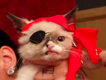 Extremely Unique: Here are 15 of the World's Most Famous Cats