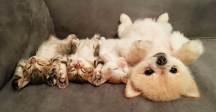Puppy Doesn't Want to Wake Her Three Kitten Friends so She Comes up with the Cutest Plan!