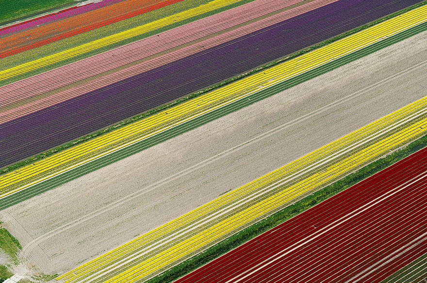 Aerial Shots: Colourful Blooming Tulips of Hollands Paint Its Own Fields