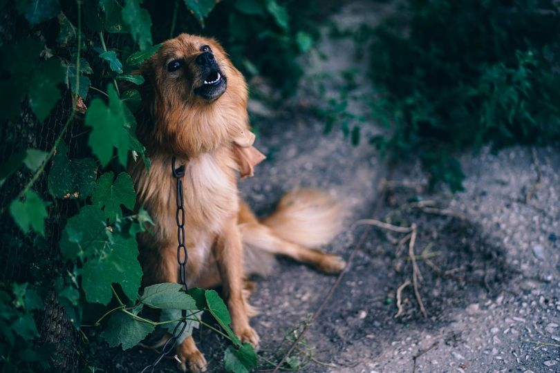 Common Dog Myths: 10 Things You Might Be Thinking Wrong About Your Pet