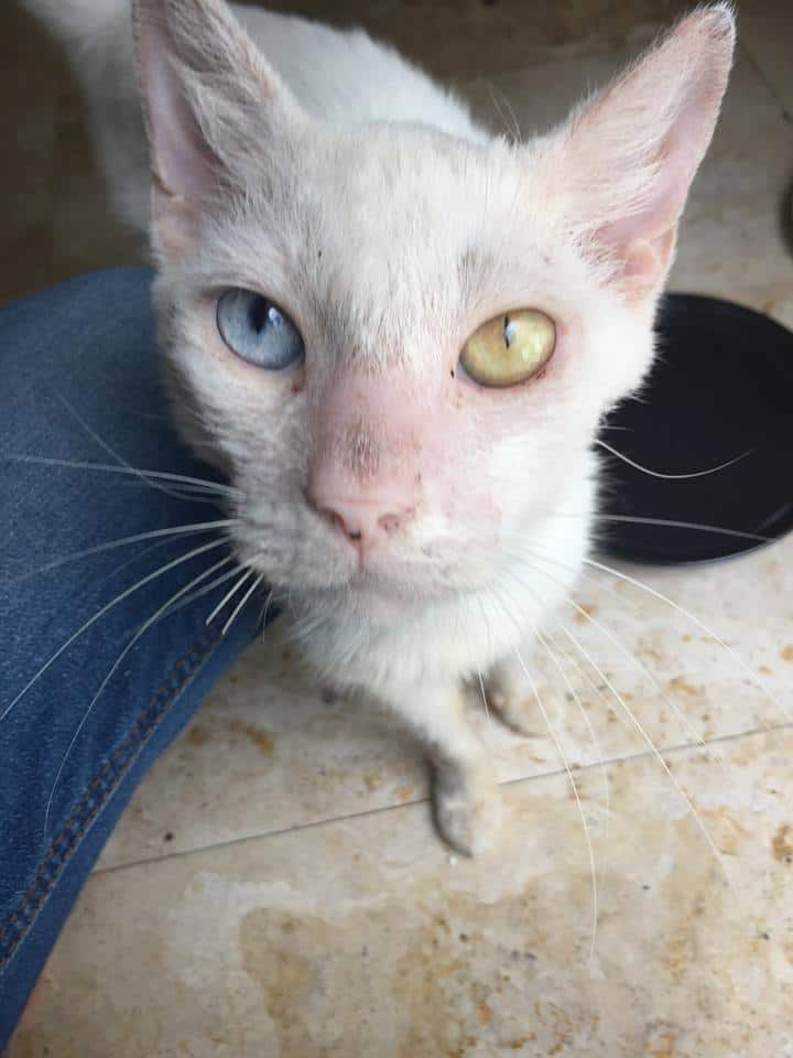 Woman Treats Scabby Stray Feline -- Moved After Discovering Blind Cat has Stunning Eyes