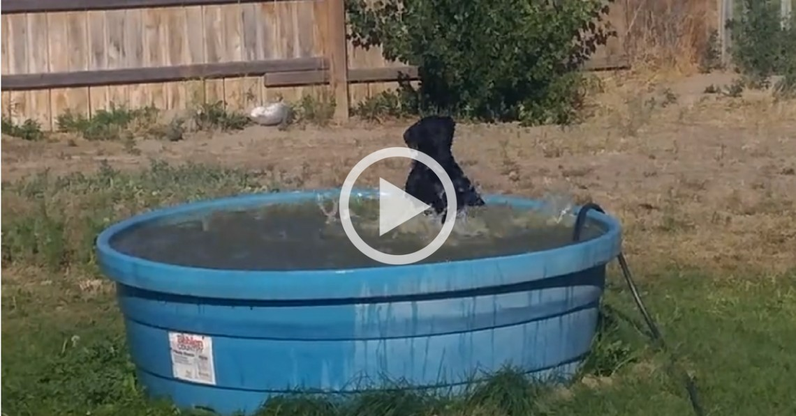 This Dog Swimming in a Kiddie Pool in the Middle of Summer Will Tickle Your Jaded Heart!