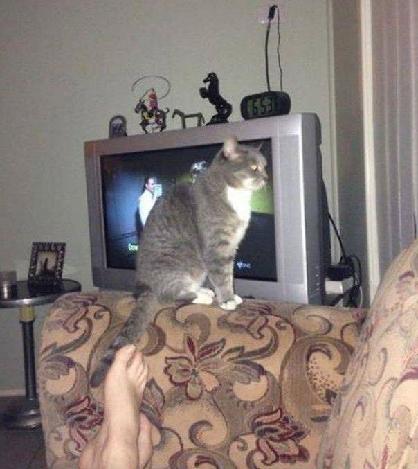 15+ Times Cats Need Attention Exactly When You Started Working