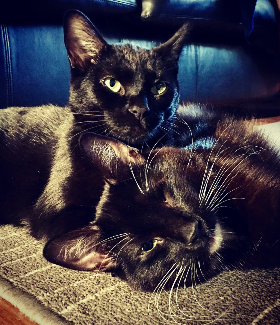 Woman Saves 'Almost Dying' Sibling Kittens and Raised them Into Gorgeous Black Cats