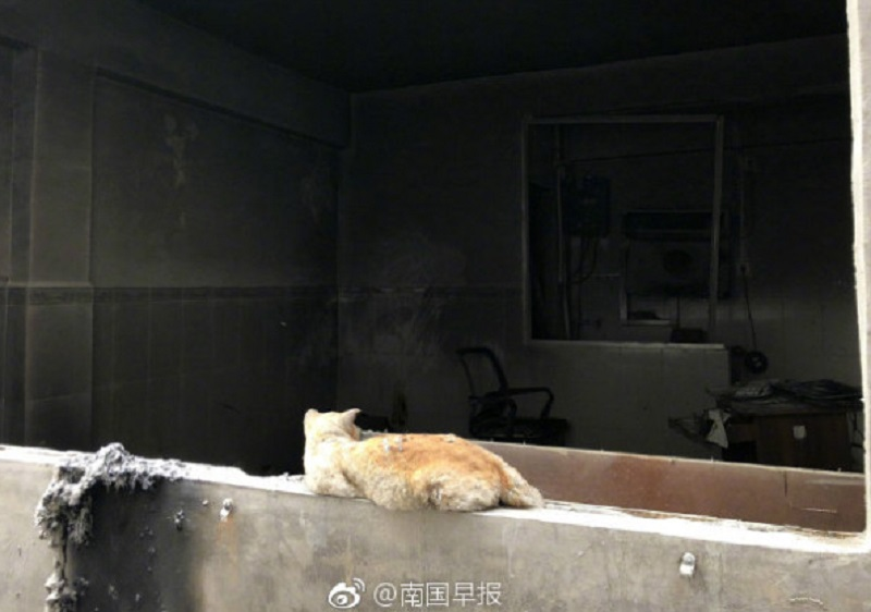 Loyal Cat Patiently Waits For His Owner In Their Burned Home