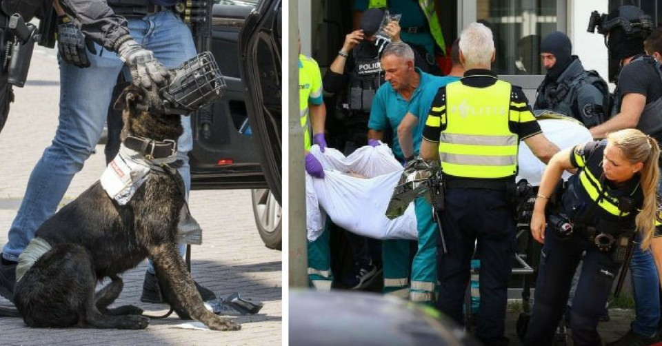 Police Dog Killed With an Axe by Man Yelling 'Allahu Akbar' in Schiedam, Holland (1)