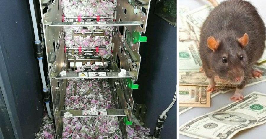 Rats Chew Cash inside an ATM