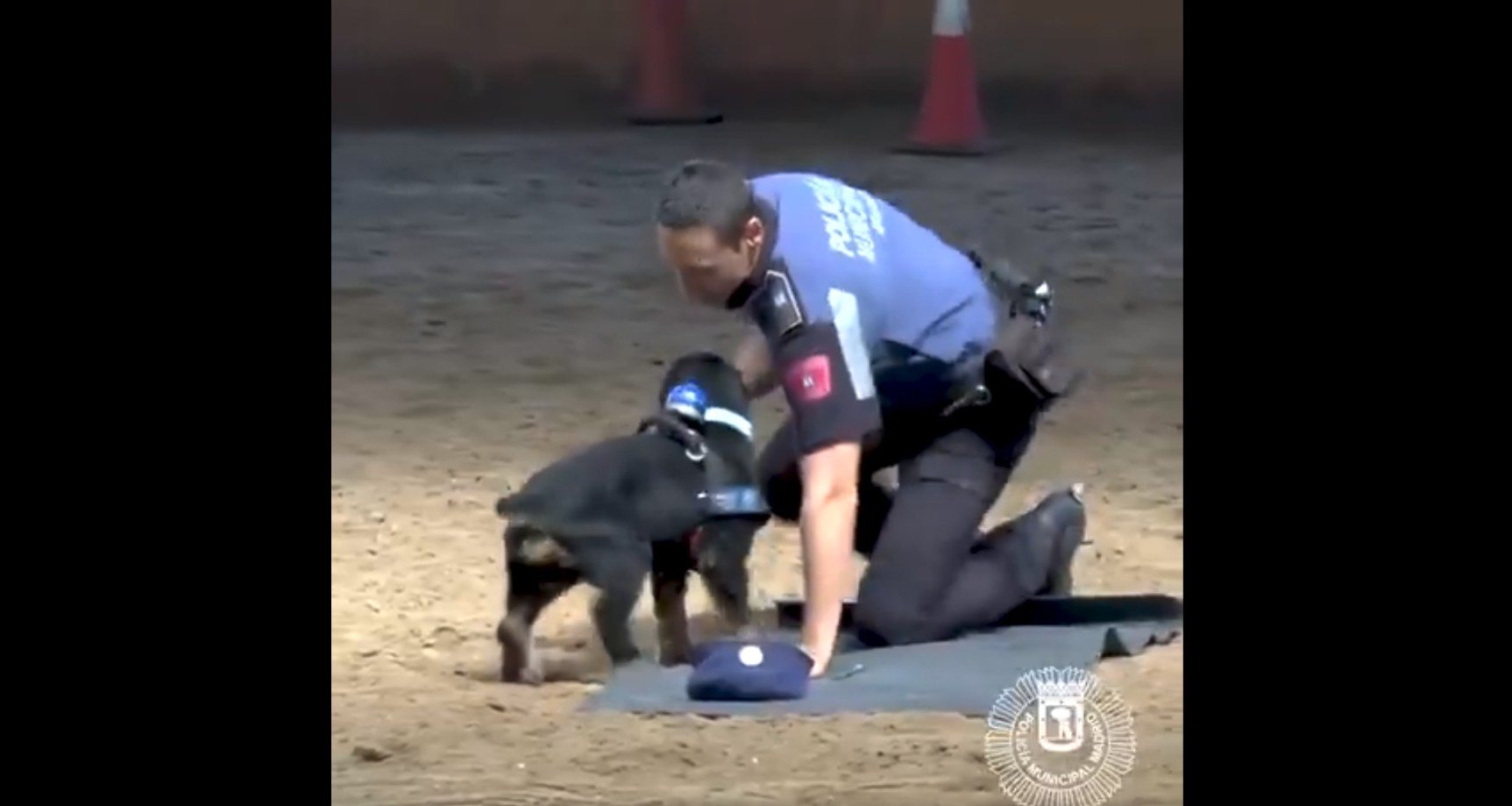 Police Dog Performs a Powerful Life Saving Technique on Cop