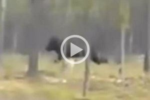 WATCH_ Chilling Video Shows Mysterious 7ft. Beast Attacking a Dog in North America (1)