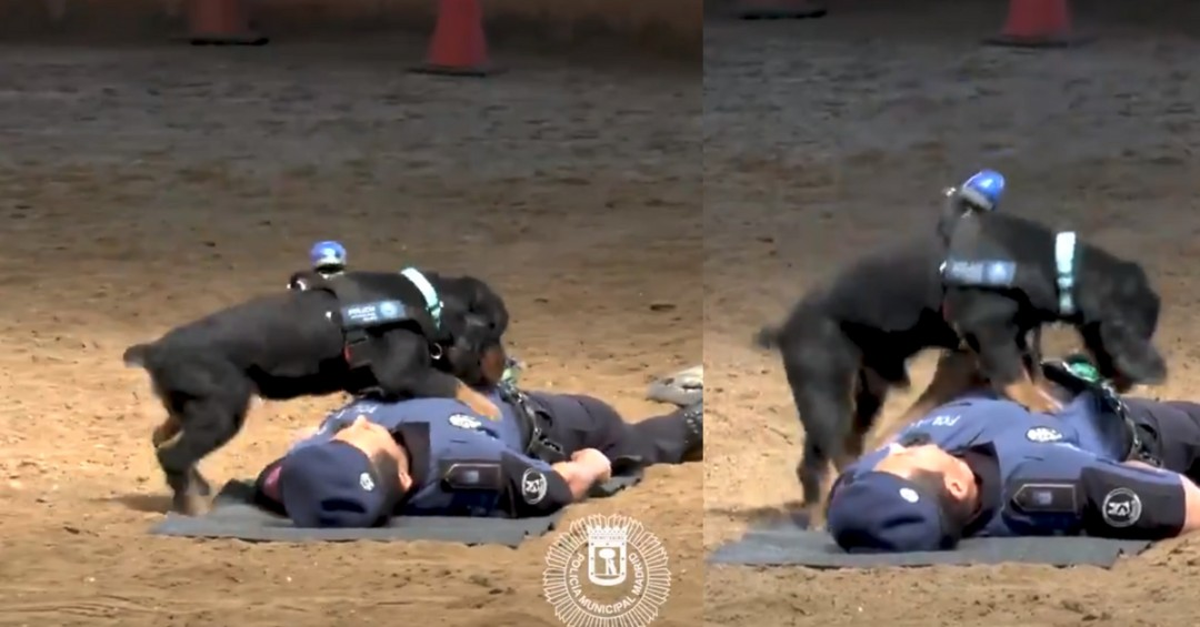 WATCH: Police Dog Saves Cop's Life Through CPR Most of Us Can't Perform Well