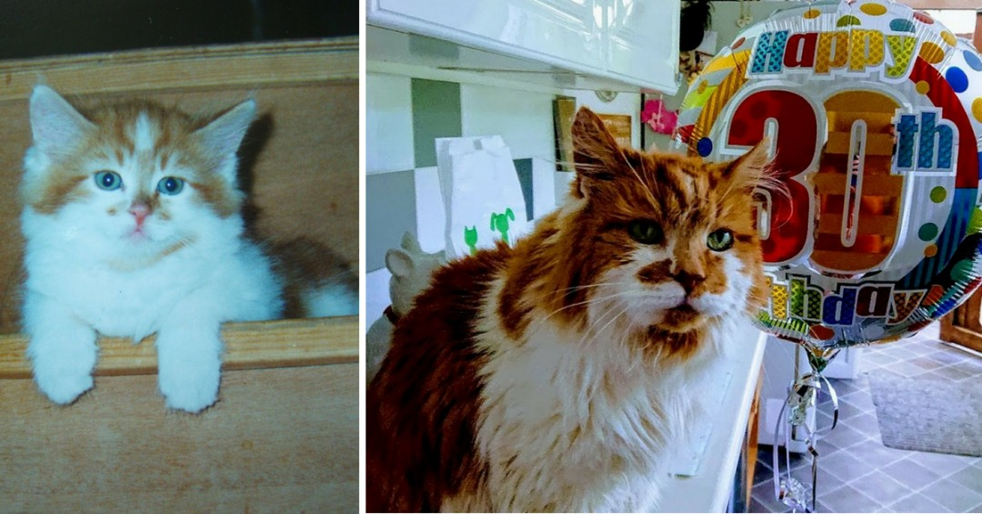 World's Oldest Cat Blows His 30th Birthday Candle