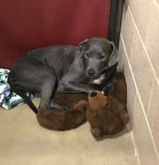 Young Dog Has No One Left But Giant Teddy After Being Surrendered in a Crowded Shelter