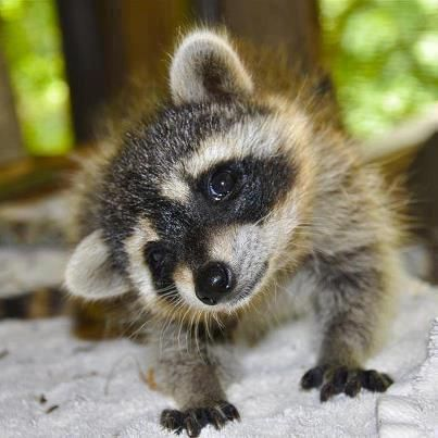 11 of the most Adorable Baby Animals of All Time