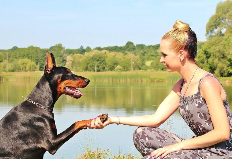 Improved Heart Health and 10 Other Reasons Why to Own a Dog