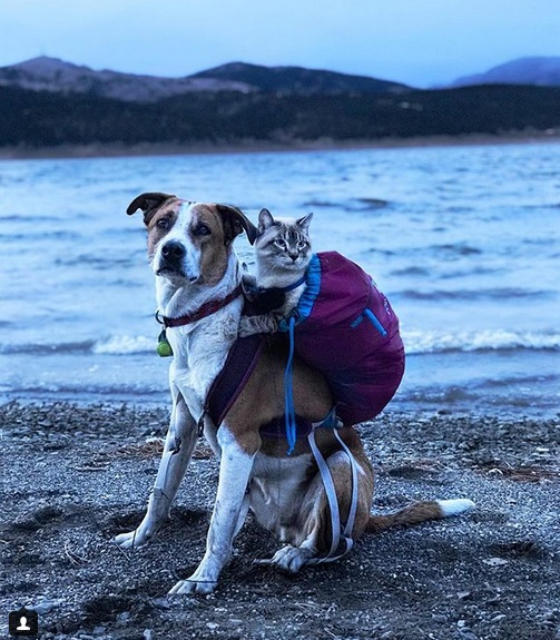 Cat and Dog Love Traveling Together like in a Fairy Tale