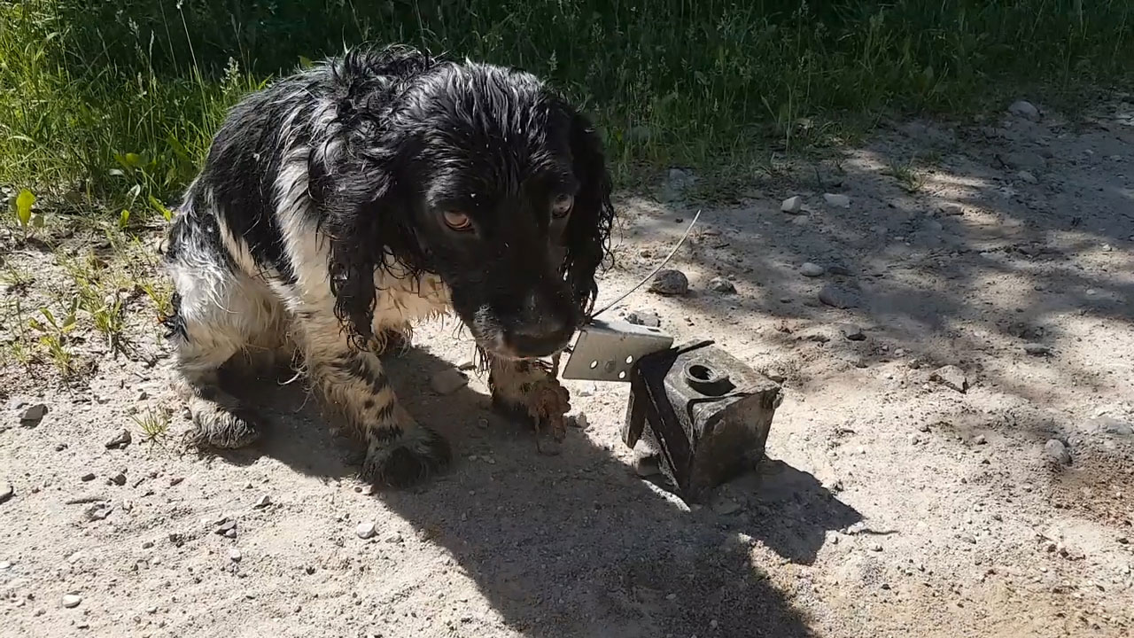 Woman Finds Wet and Shivering Dog Tied to an Anchor -- This Video Will Break Your Heart